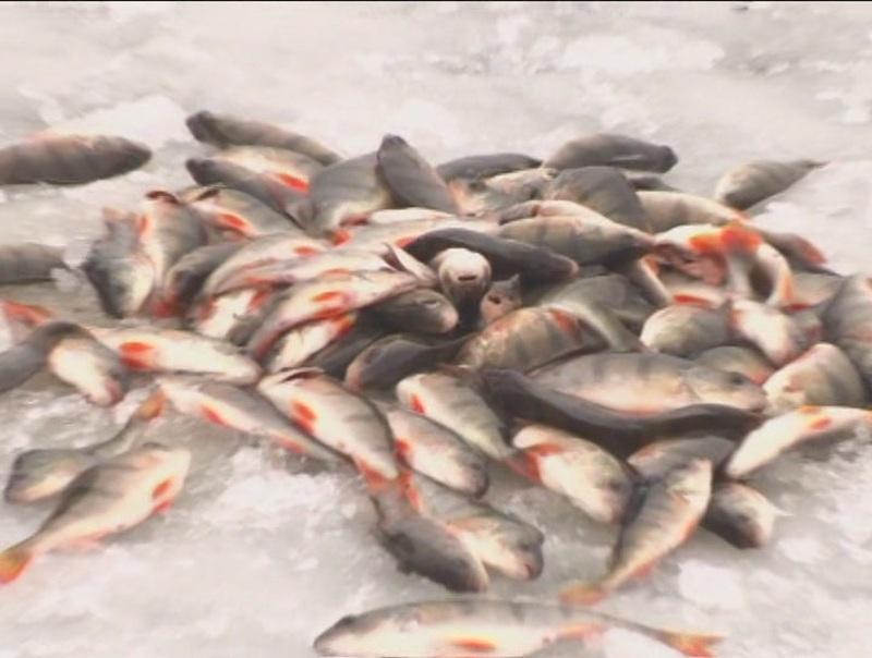 Видео все для рыбалки